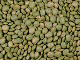 Thorogreen Lima Bean 50# Seed From The Dirty Gardener