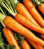 The Dirty Gardener Heirloom Danvers Carrots