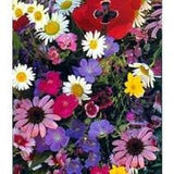 Shady Wild Flower Seed Mix 1 Pound From The Dirty Gardener