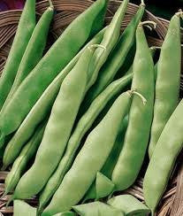Burpee Stringless Bush Beans- Bulk Seed 5 Full Pounds