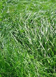 Erosion Control Grass Seed Mixture- 50# Bulk Pounds from The Dirty Gardener
