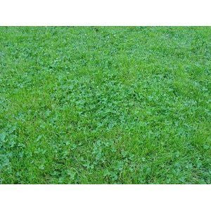Ecology Lawn Seed- 2# Low Grow- No Mowing From The Dirty Gardener