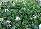 The Dirty Gardener Erosion Control Grass Seed