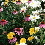 Shady Wild Flower Seed Mix 1/2 Pound From The Dirty Gardener