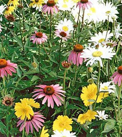 Partial Shade Wildflower Seed Mix, 1 Pound From The Dirty Gardener