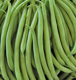 Heirloom Provider Bush Beans
