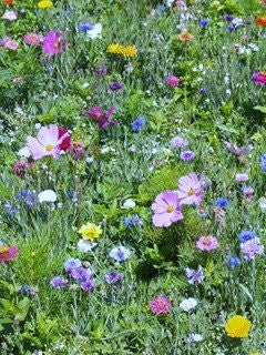 Cut Flower Seed Patch- Covers 50 Square Feet!