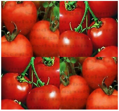 Heirloom Rutgers Tomato - 150 Seeds