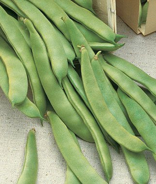 The Dirty Gardener Heirloom Romano Pole Beans, 2 Ounces