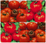 Marglobe Supreme Tomato Seeds, 5,000+ Seed/.5 Ounces