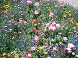 4th of July MixElite Wildflower Seed Mixture - .13 Pounds - The Dirty Gardener