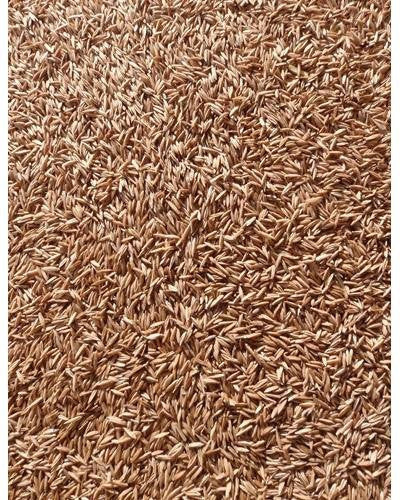 The Dirty Gardener Kentucky Bluegrass Lawn Grass 98/85, 1 Pound