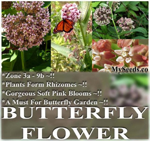 Butterfly Flower Seed- 1,250+ Seeds (Milkweed Virginia Silkweed