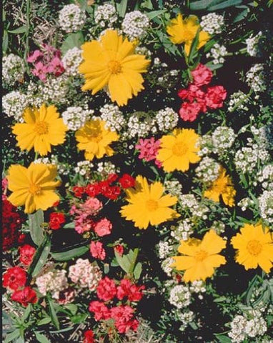 Low Growing Wildflower Seed Mixture- 1/2 Pound from The Dirty Gardener