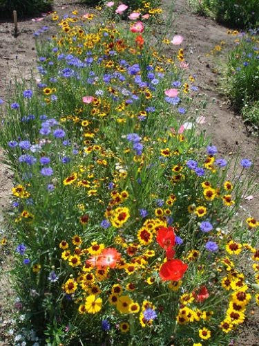 The Dirty Gardener Elite Wildflower Mix, 5 Pounds/3-5 Acres
