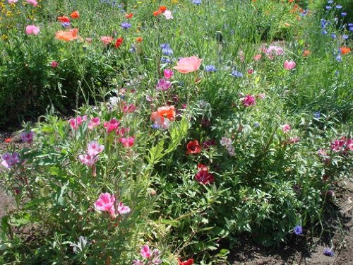 The Dirty Gardener Elite Wildflower Seed Mixture, 1 Pound