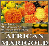 The Dirty Gardener African Marigold Crackerjack T. Erecta Flower Mix