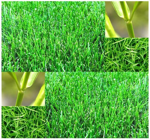 The Dirty Gardener Bermuda Lawn Grass, 1 Pound