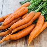 1/4 Pound of Danvers Carrot Seed- Bulk Garden Seed - The Dirty Gardener