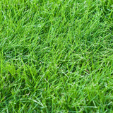 10# Kenicott Creeping Red Fescue for Complete Shady Areas. Proprietary Variety
