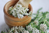 1/2 Pound of White Yarrow Seeds (Achillea Millefolium) Bulk Wildflower Seeds