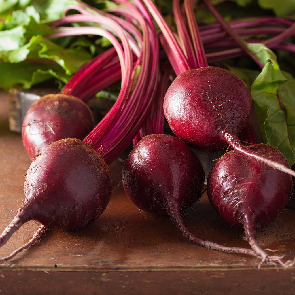 """Bull's Blood"" Heirloom Beet Seed 1 oz Bulk From The Dirty Gardener - The Dirty Gardener"