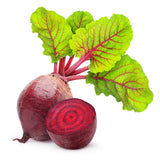 """Bull's Blood"" Heirloom Beet Seed (Qty 50 Seeds) From The Dirty Gardener - The Dirty Gardener"