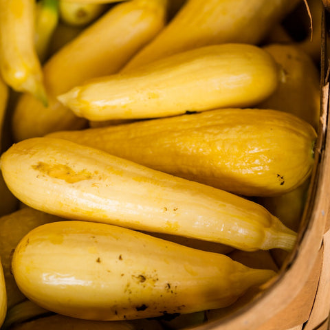 1# Straight Neck Squash Seeds- The Dirty Gardener