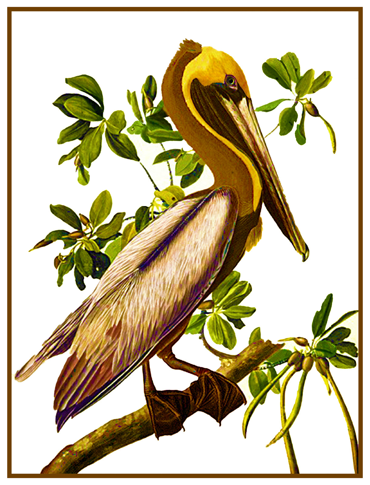 Large Size Symbols Scarlet Quince AUD006lg Brown Pelican by John James Audubon Counted Cross Stitch Chart
