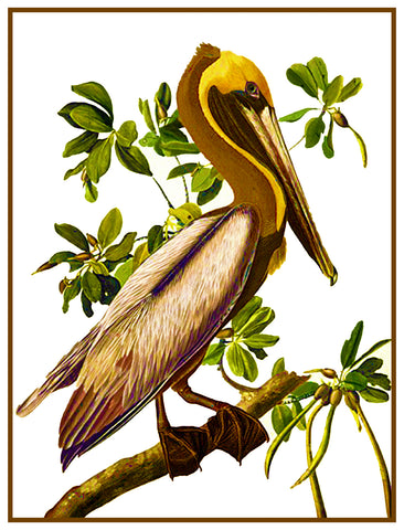 Brown Pelican Bird Illustration by John James Audubon Counted Cross Stitch Pattern