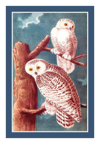 Pair of Snowy Owls Bird Illustration by John James Audubon Counted Cross Stitch Pattern