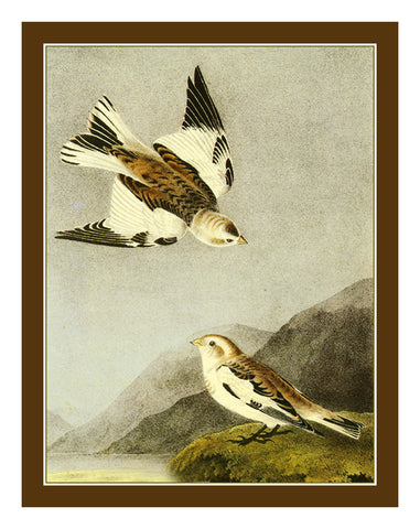 Snow Bunting Birds Illustration by John James Audubon Counted Cross Stitch Pattern