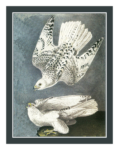 White Gyr Falcons Bird Illustration by John James Audubon Counted Cross Stitch Pattern