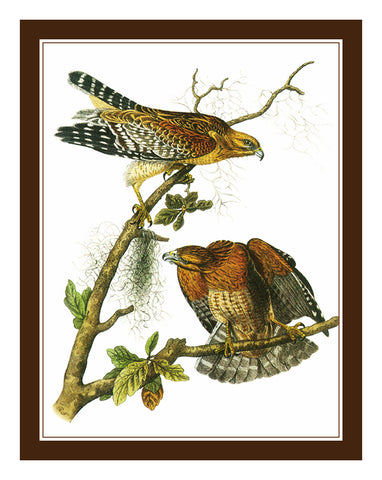 Pair of Red Tailed Hawks Birds Illustration by John James Audubon Counted Cross Stitch Pattern