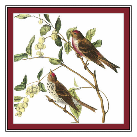 Common Redpolls Bird Illustration by John James Audubon Counted Cross Stitch Pattern