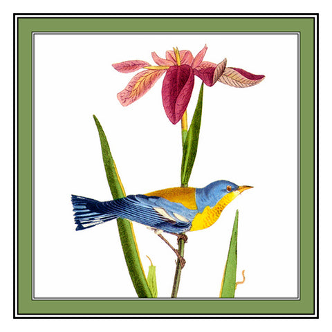 Parula and an Iris Bird Illustration by John James Audubon Counted Cross Stitch Pattern