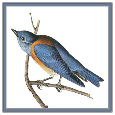 Bluebird Bird Illustration by John James Audubon Counted Cross Stitch Pattern