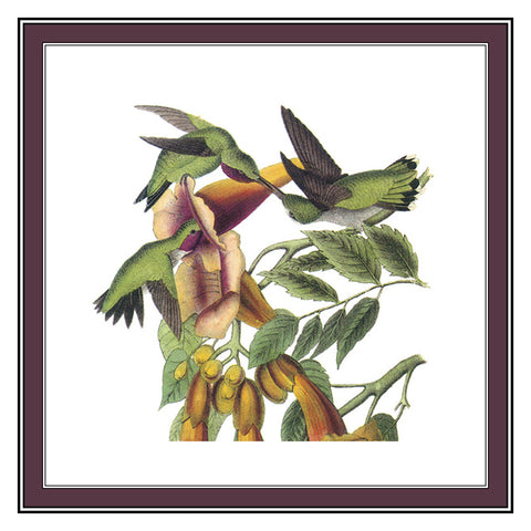 Ruby Necked Hummingbirds Bird Illustration by John James Audubon Counted Cross Stitch Pattern