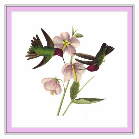 Pair of Anna Hummingbirds Bird Illustration by John James Audubon Counted Cross Stitch Pattern