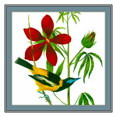A Troupial Bird Illustration by John James Audubon Counted Cross Stitch  Pattern - Orenco Originals LLC