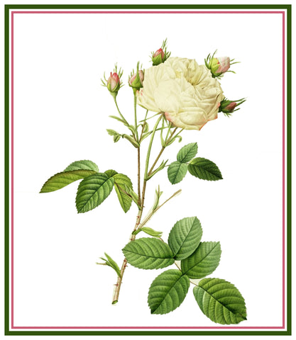 White Provence Rose Flower Inspired by Pierre-Joseph Redoute Counted Cross Stitch Pattern