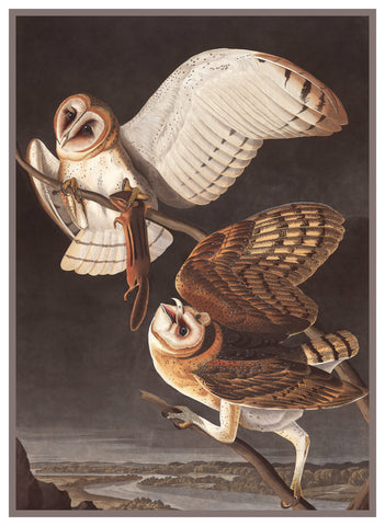 Pair of Barn Owls Bird Illustration by John James Audubon Counted Cross Stitch or Counted Needlepoint Pattern