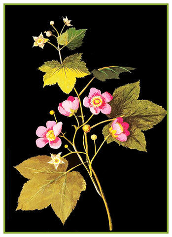 American Raspberry Flowers by Mary Delany Counted Cross Stitch or Counted Needlepoint Pattern