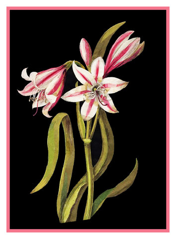 Asphodel Lilly Flowers by Mary Delany Counted Cross Stitch Pattern