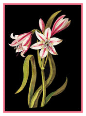 Asphodel Lilly Flowers by Mary Delany Counted Cross Stitch or Counted Needlepoint Pattern