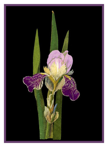 Purple Iris Flowers by Mary Delany Counted Cross Stitch or Counted Needlepoint Pattern