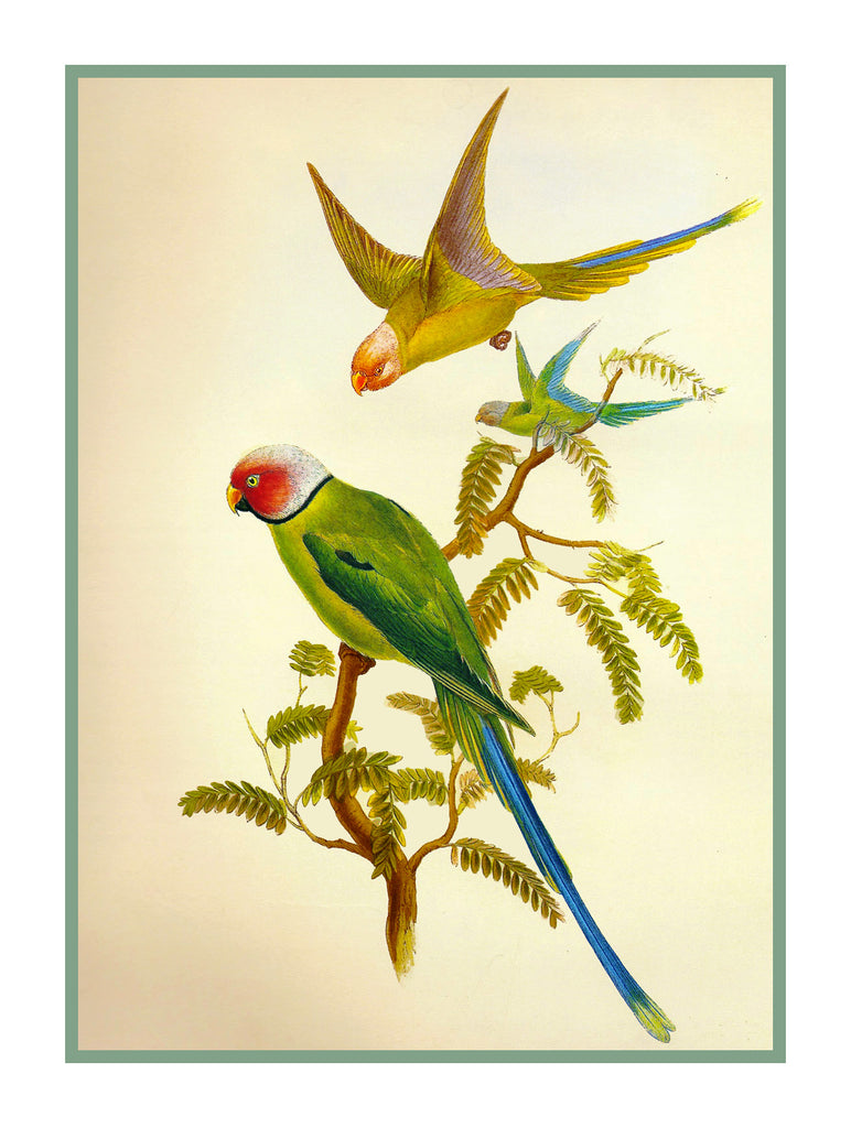 Blossom Headed Parakeets by Naturalist John Gould Birds Counted Cross Stitch or Counted Needlepoint Pattern