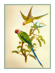 Blossom Headed Parakeets by Naturalist John Gould Birds Counted Cross Stitch  Pattern - Orenco Originals LLC