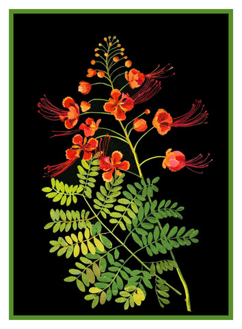 Pride of Barbados Peacock Flowers by Mary Delany Counted Cross Stitch or Counted Needlepoint  Pattern