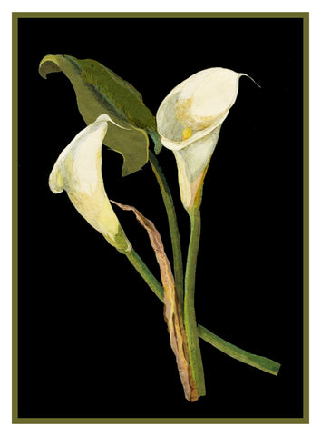 Calla Lily Flowers by Mary Delany Counted Cross Stitch or Counted Needlepoint  Pattern